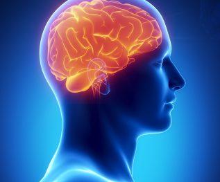 meditatie vergroot hersenen